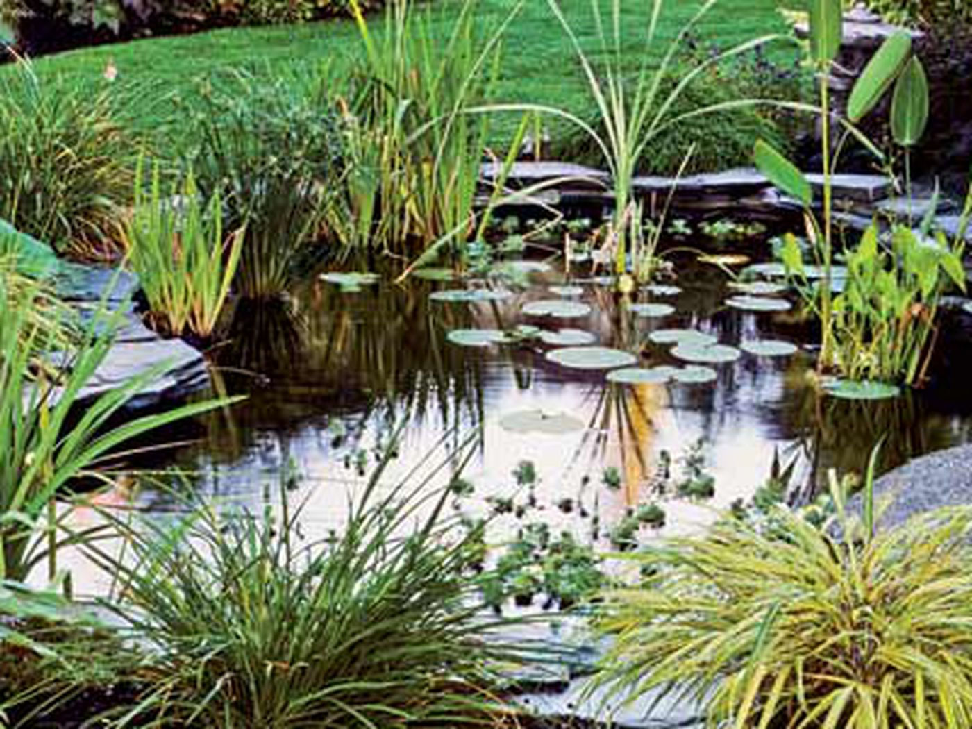 Everything You Need to Know to Build the Perfect Backyard Pond - This Old  House