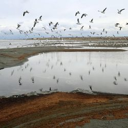 Birds fly over the Great Salt Lake on Wednesday, Oct. 30, 2013. Gov. Gary Herbert is in the process of developing a 50-year water vision for Utah. To lead out this effort, the governor will organize the State Water Plan Advisory Team.