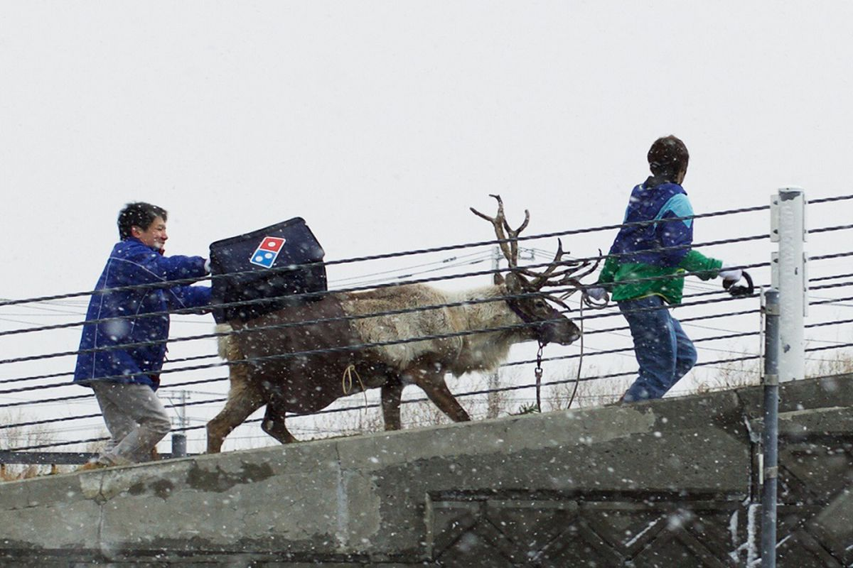 Forget Drones, Domino\'s Wants to Deliver Pizza via Reindeer - Eater