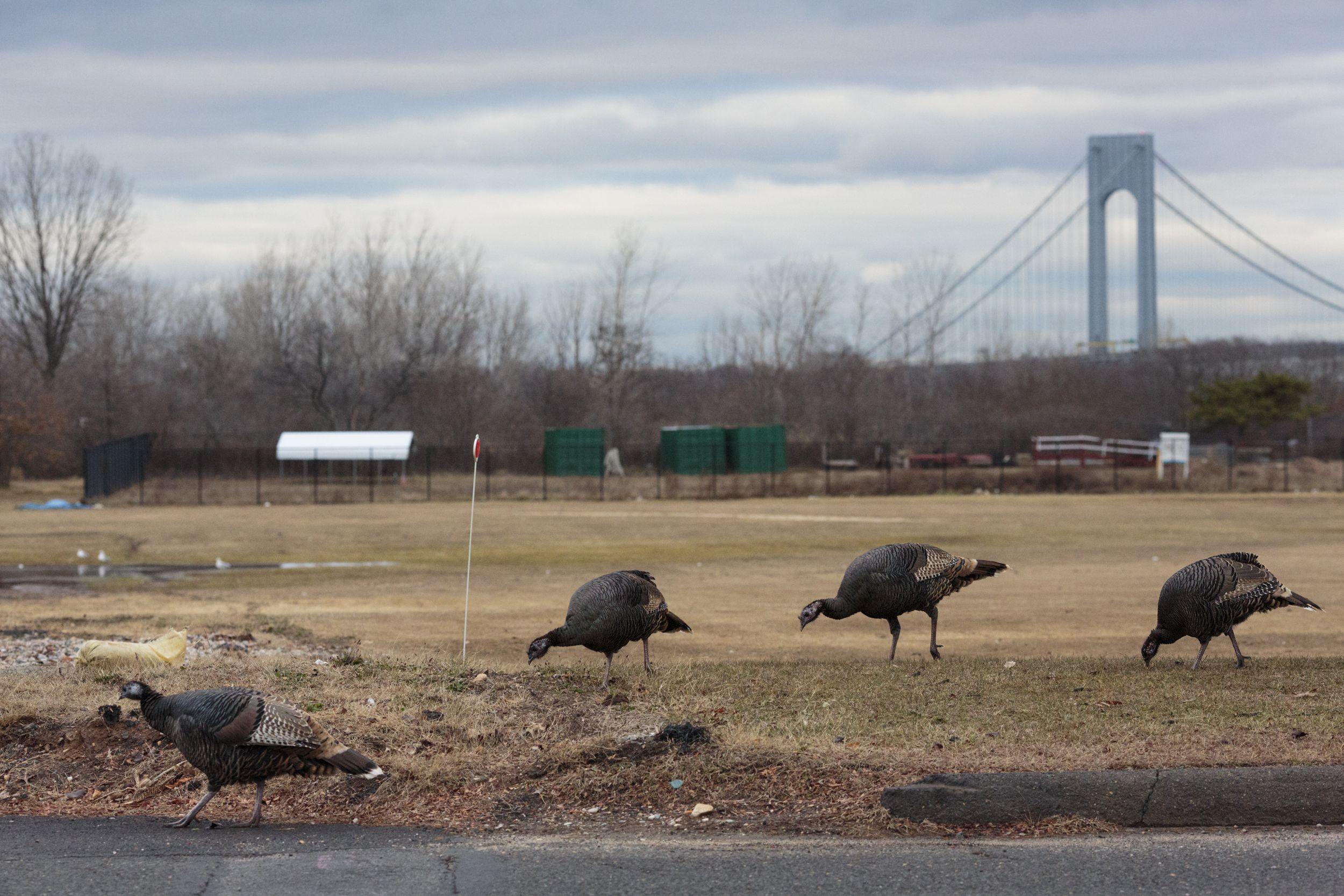 Deer Turkey Bridge