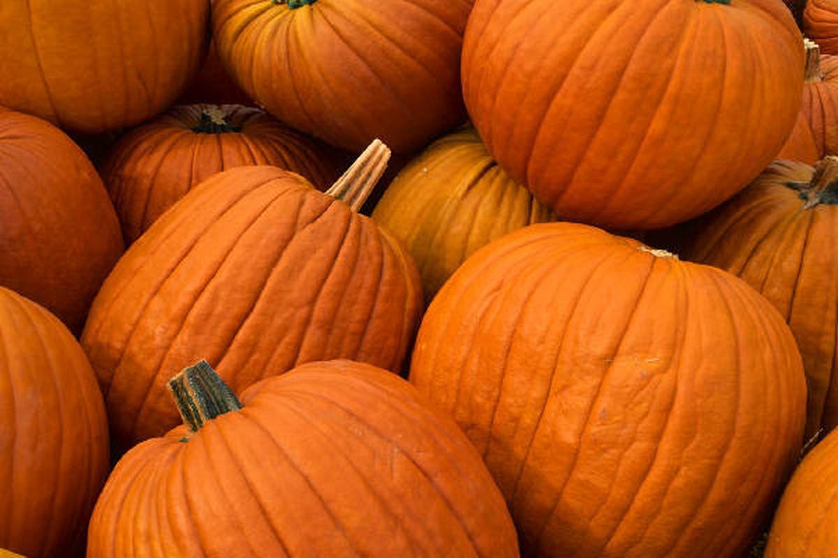 """via <a href=""""http://blog.mpl.org/nowatmpl/pumpkins.jpg"""">blog.mpl.org</a>"""