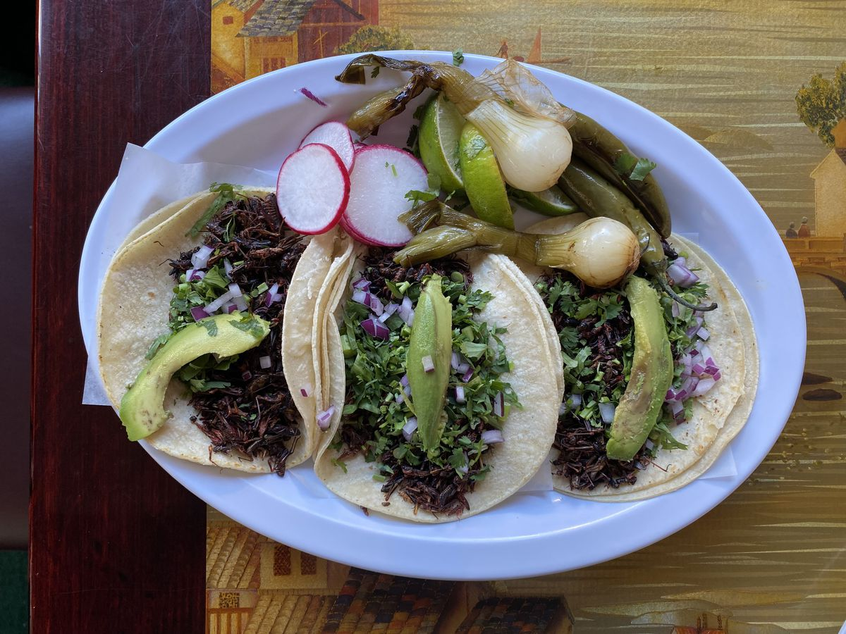 An overhead photograph of a plate of tacos filled with crickets, a sliver of avocado, cilantro, and red onion.