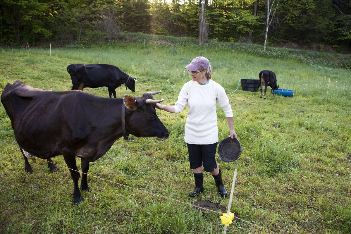 Cows at a farm, being cute