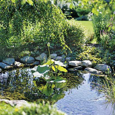 Pond And Stones