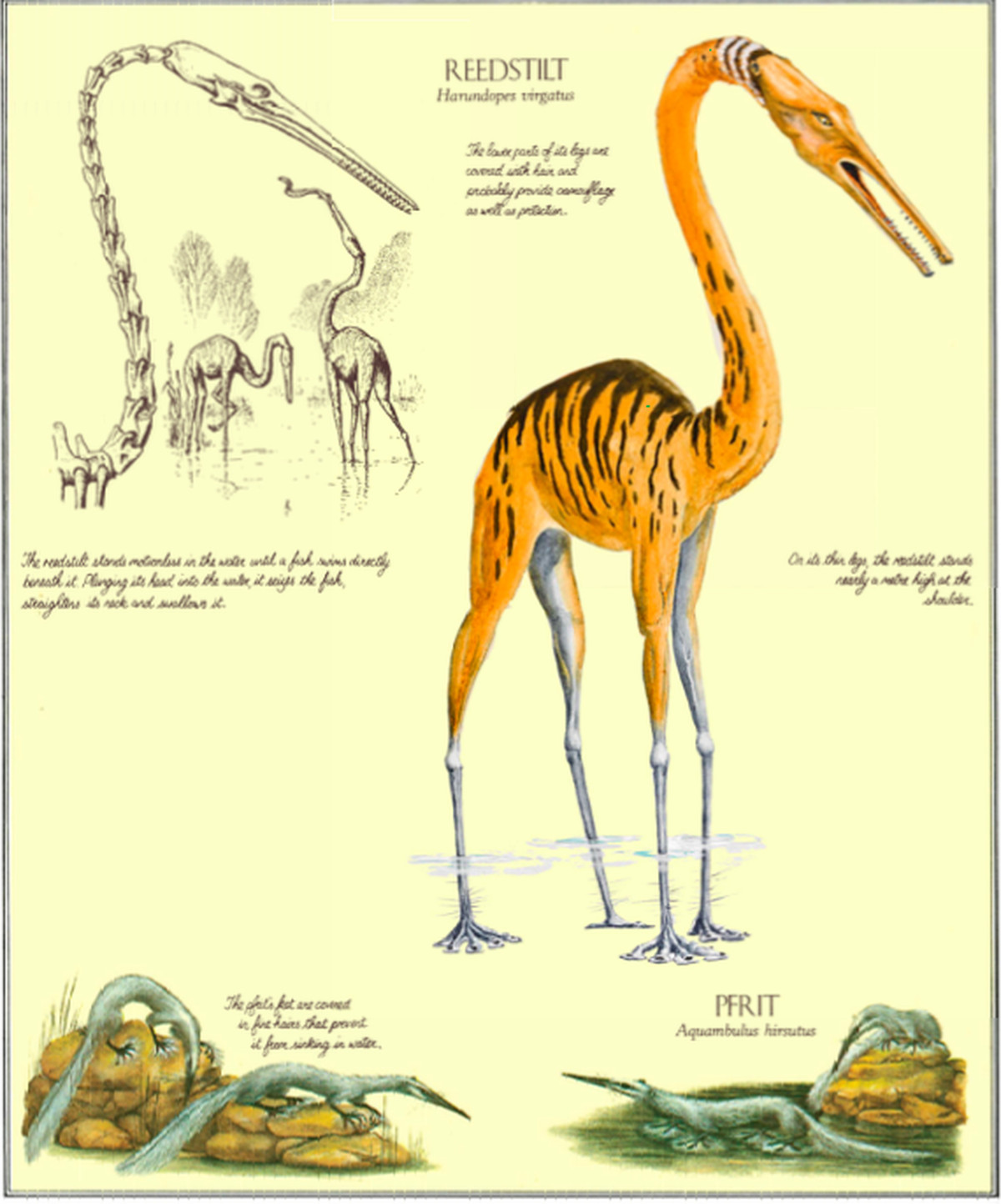 This book imagines what animals might look like if humans ...