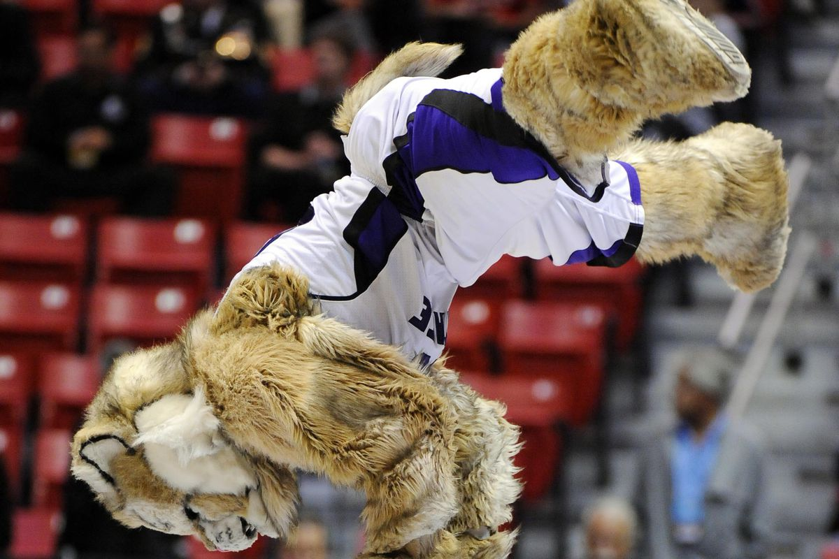 Hey, check it out! A picture of the Weber State mascot!