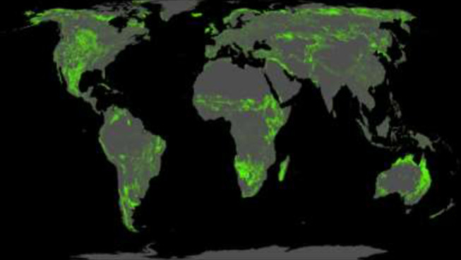 This map shows potential forest restoration areas around the world.