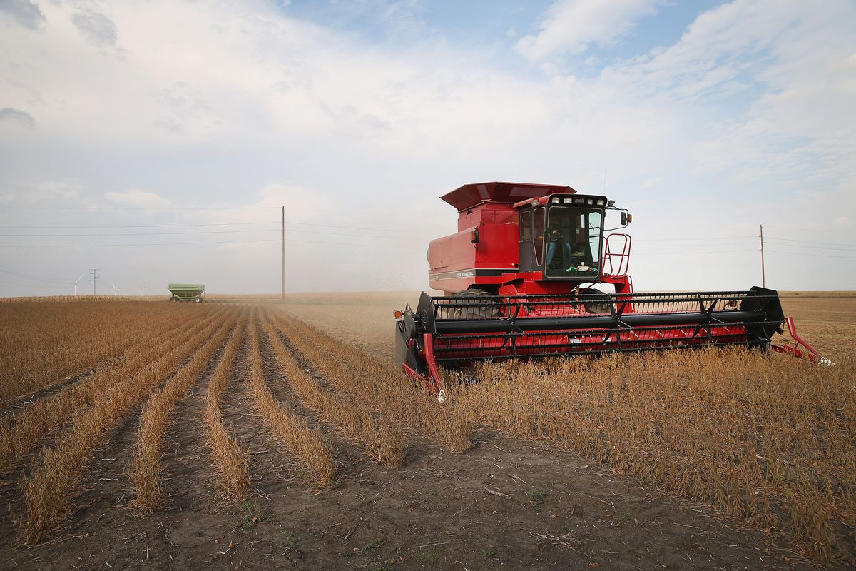 Trump China trade war: US farms are filing for bankruptcy - Vox