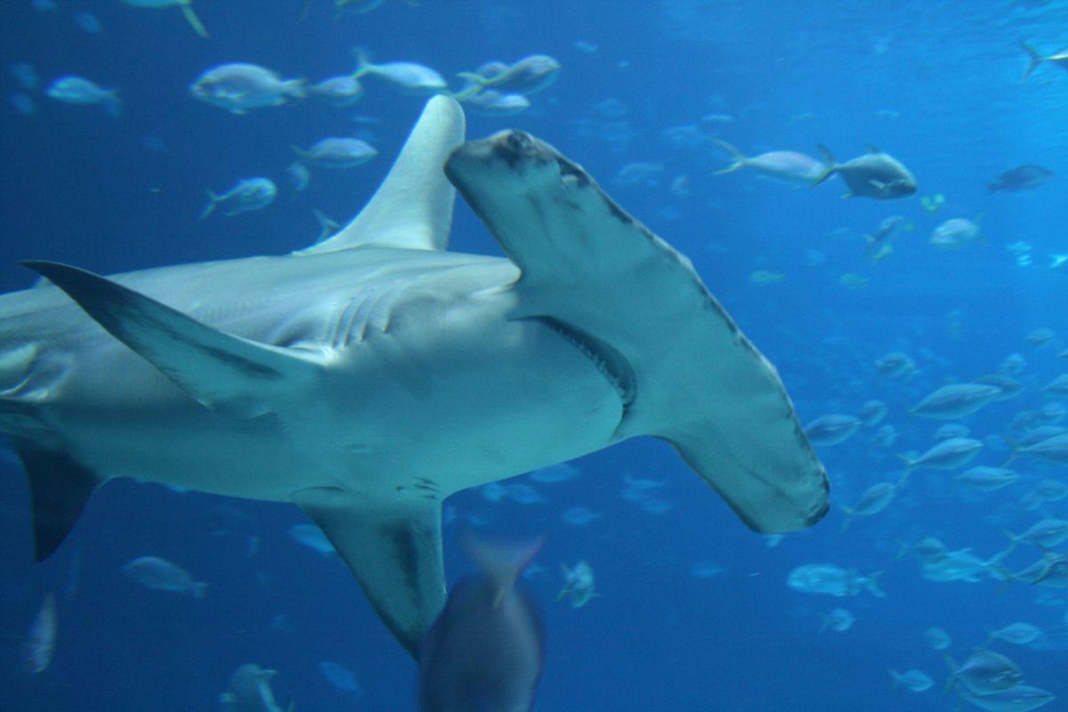 watch as shark week slowly drives this shark scientist insane vox