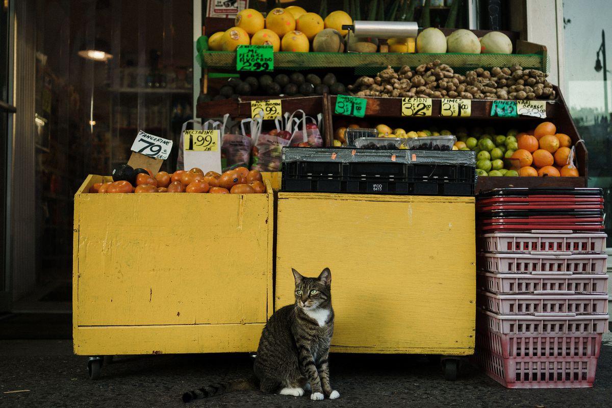 A bodega cat in Brooklyn, NY.