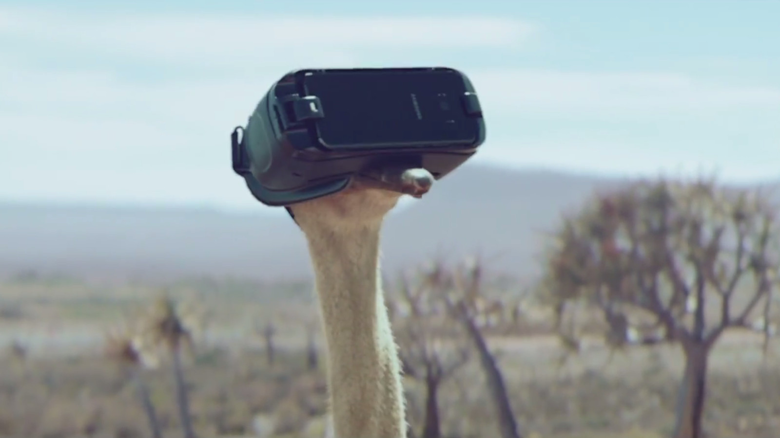 Samsung Is Now Selling Virtual Reality Using An Ostrich In