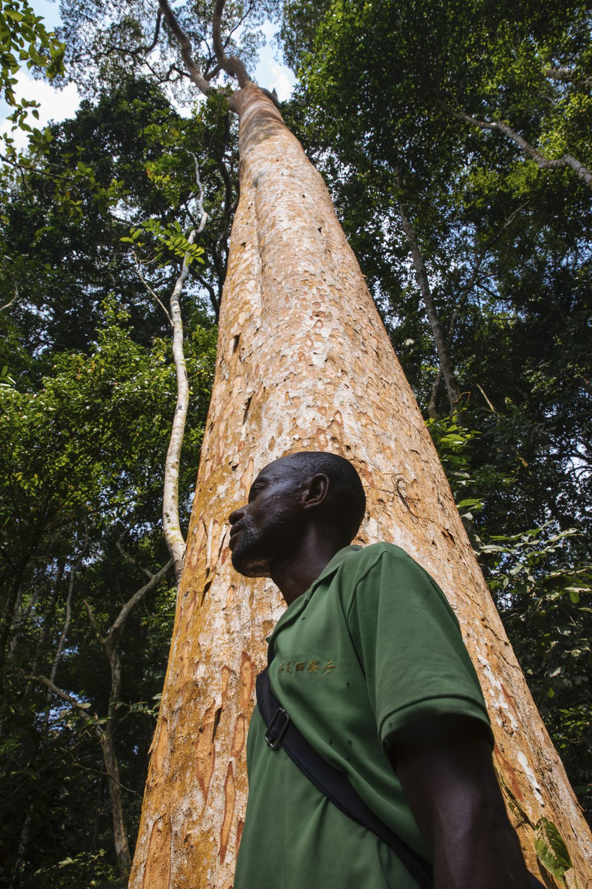 Muzinga stands in front of a sun-kissed Afrormosia tree.