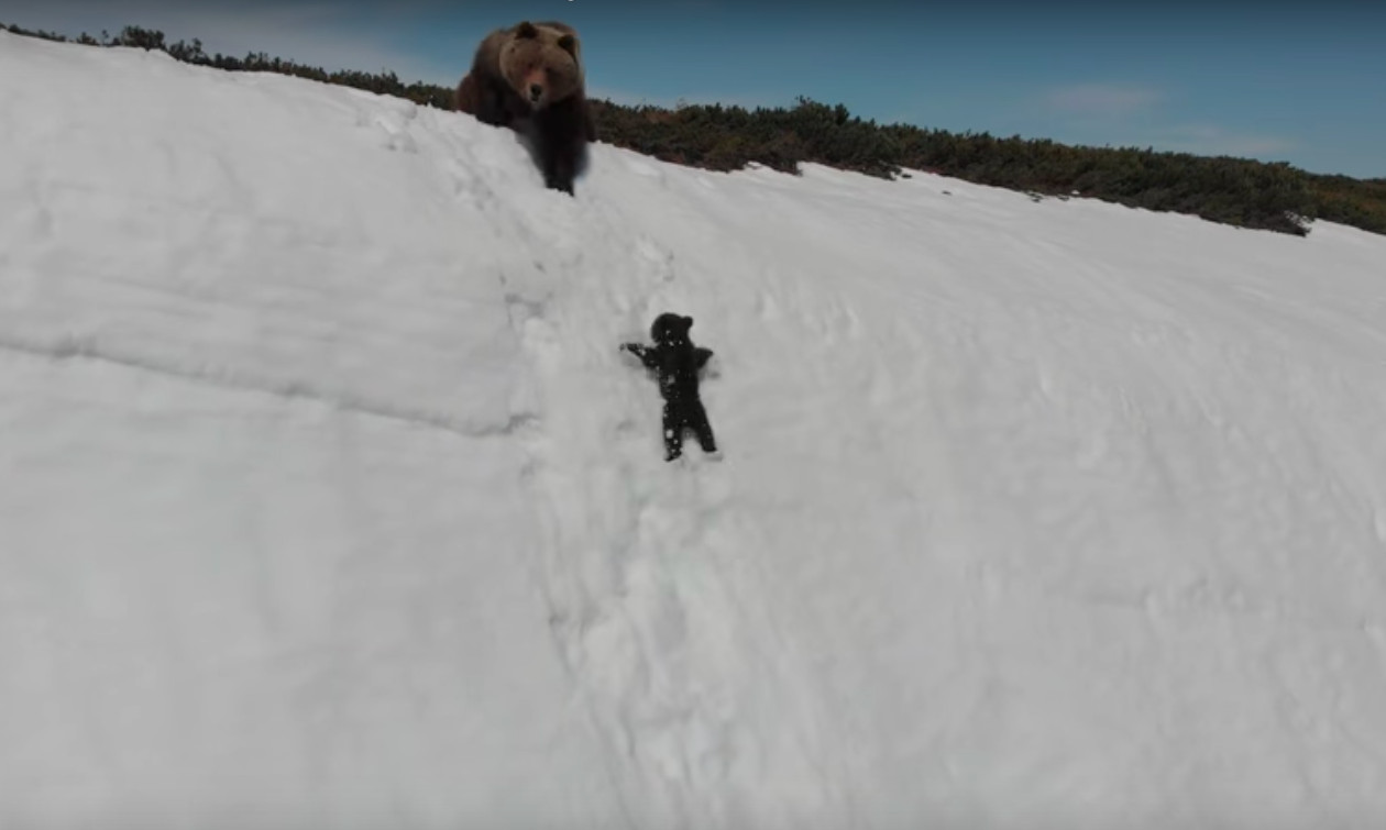 That Adorable Baby Bear Clip Captures The Dark Side Of Wildlife Videos The Verge