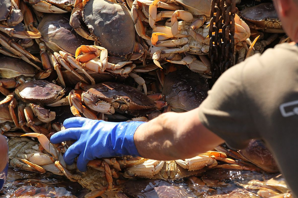Dungeness Crabs Are Toxic, Declares California Health