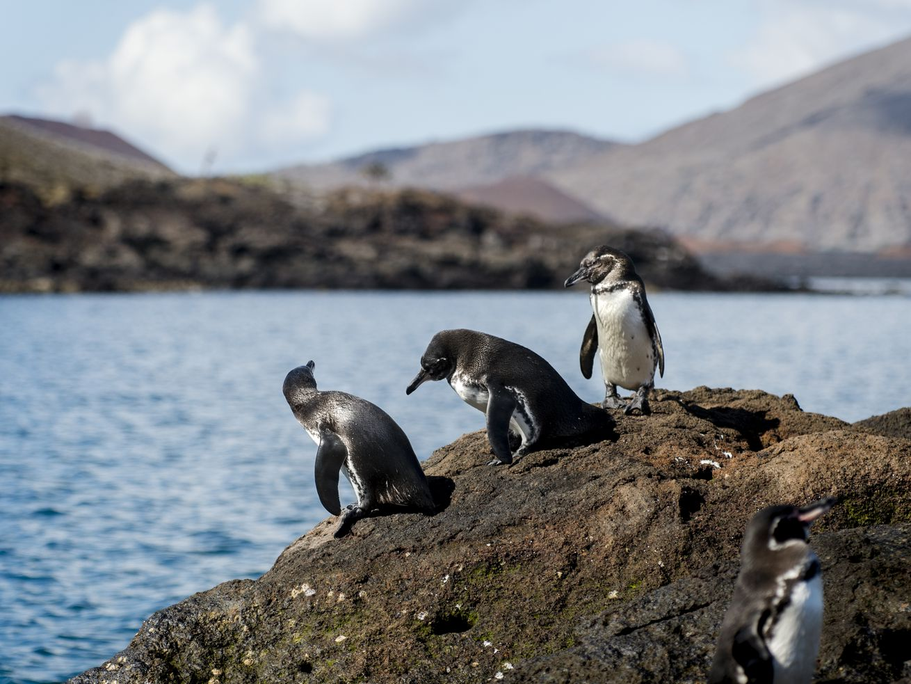 These adorable penguins want a rich diversity of life on Earth. And you should too.