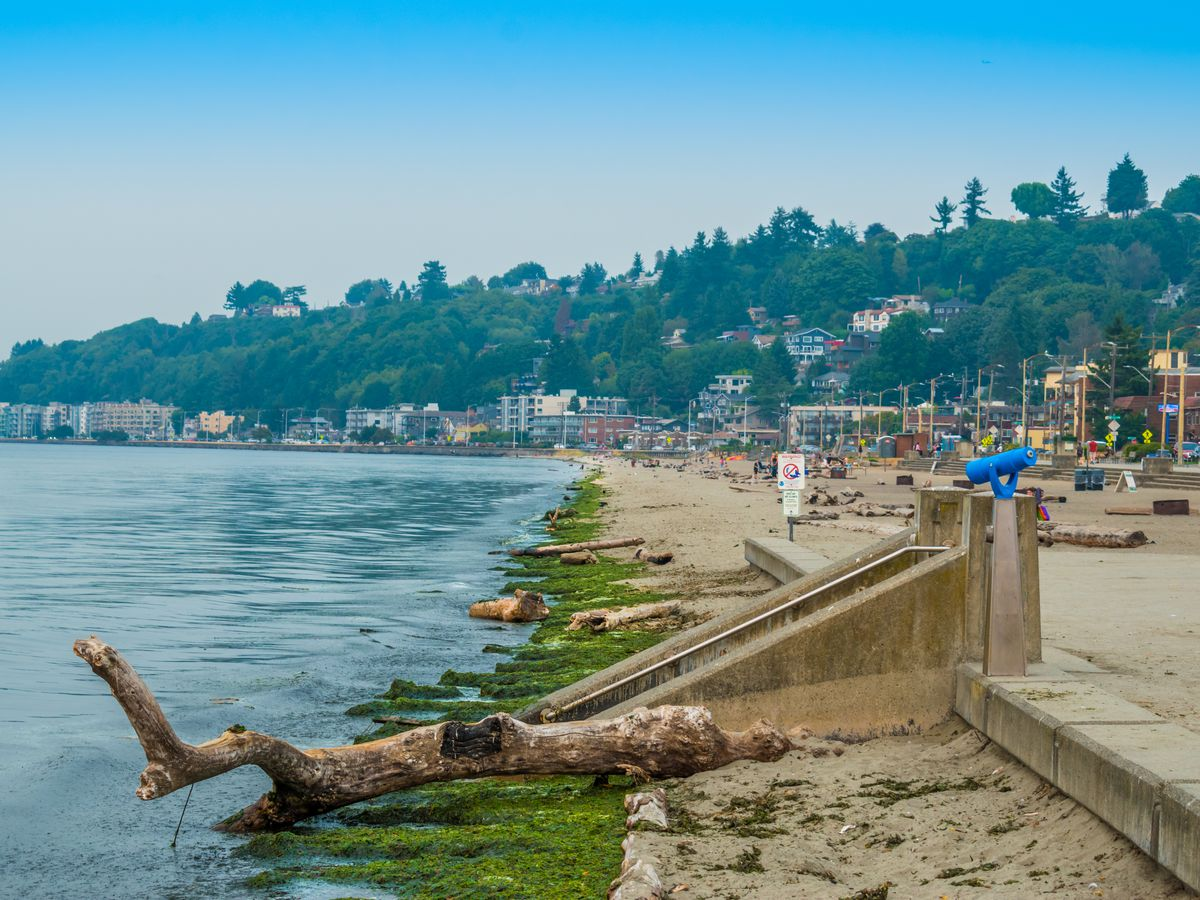 A beach on a sunny day. At the front, a short concrete seawall with concrete stairs separates sandy beach from a waterfront area full of seaweed and driftwood.