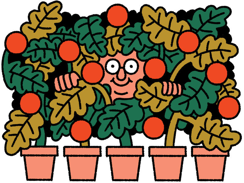 A person with a happy expression peers through a group of plants which are emerging from a row of planters. This is an illustration.