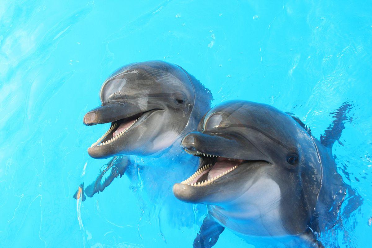 dolphin (SHUTTERSTOCK)