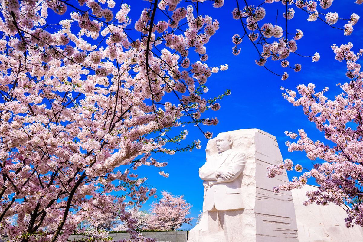 Cherry blossoms at the Martin Luther King, Jr. Memorial