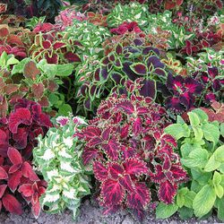 Get The Right Plants To Have It Made In Shade Deseret News