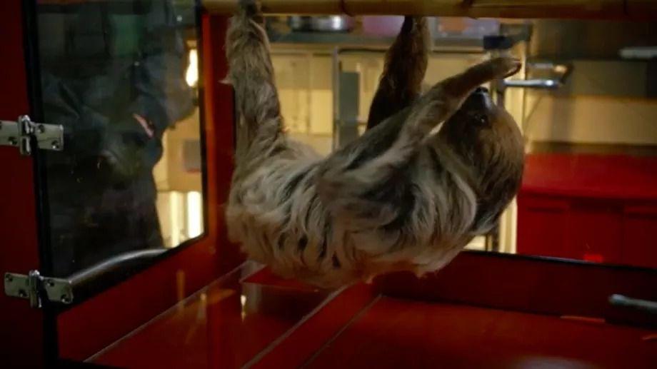 A sloth on CBS's Zoo.