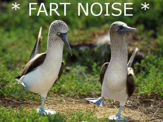 Fart Noise