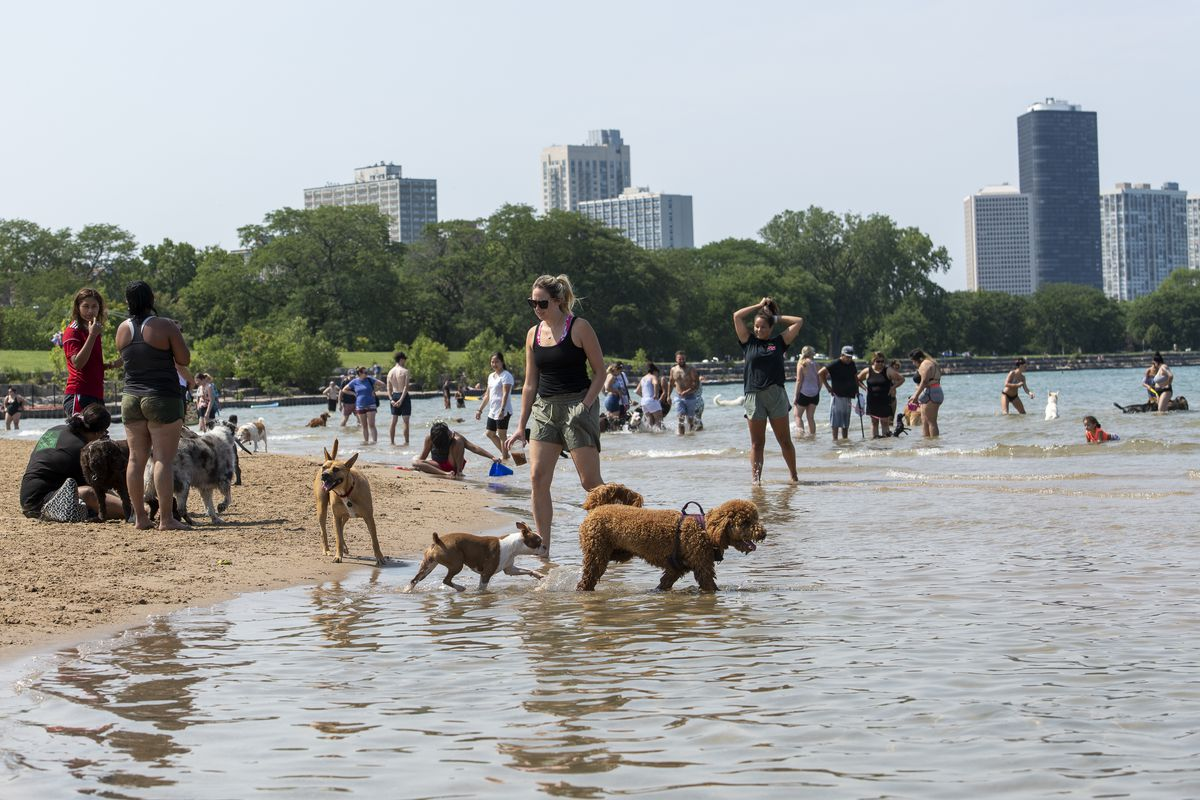 People enjoy their time at the beach with their dogs at the Montrose Dog Beach located next to Montrose Beach.