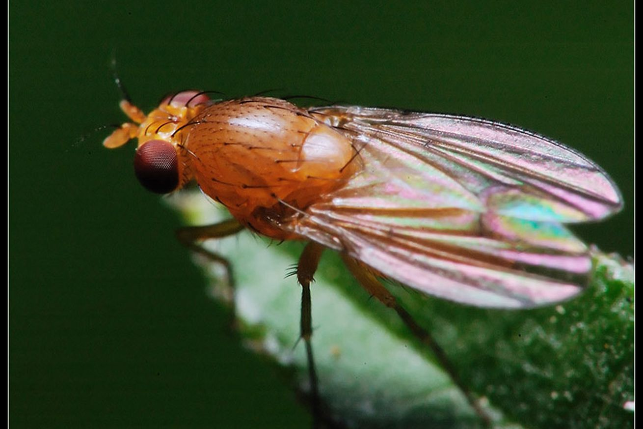 we can learn from fruit fly brains to improve our search algorithms