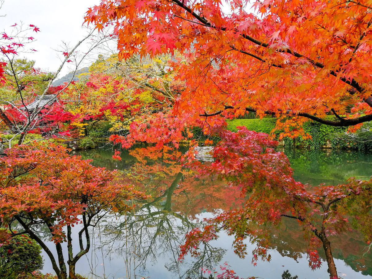 Where To See Fall Foliage In Seattle Curbed Seattle