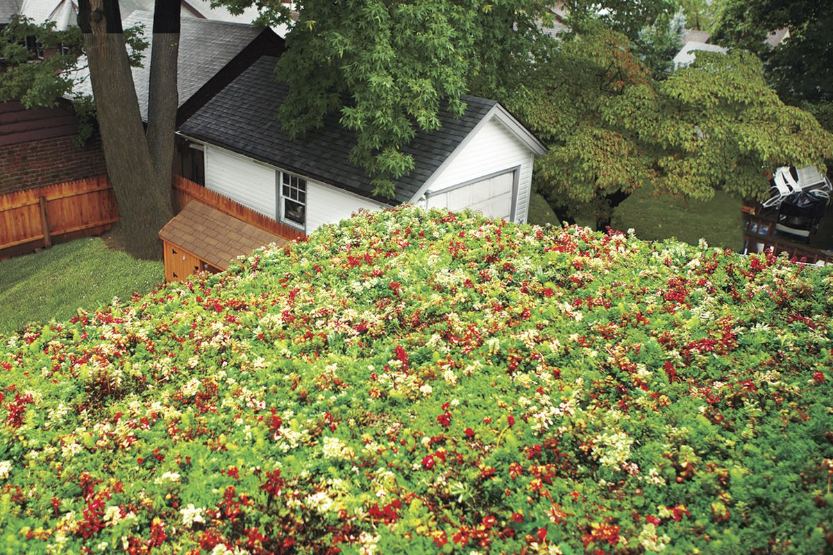 How To Install A Green Roof This Old House