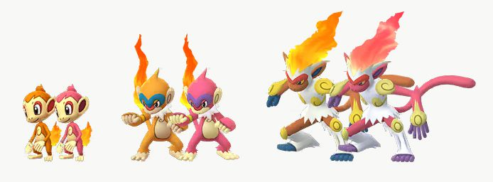 Chimchar and its evolutions stand with their Shiny forms in Pokémon Go