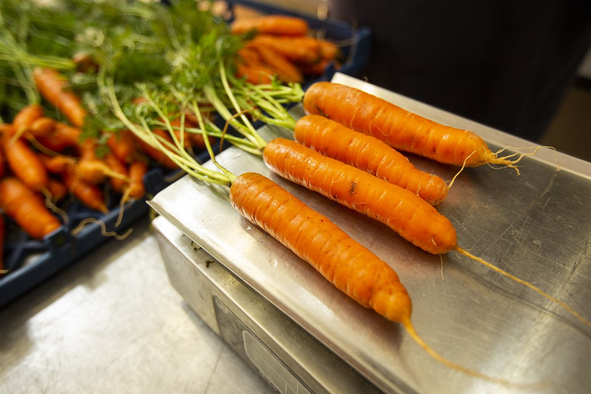 Freshly harvested carrots on a scale