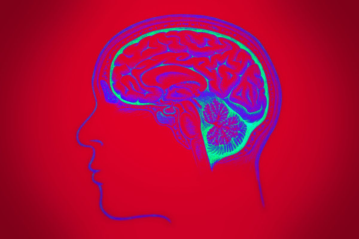 In Developing Brain Scientists Find >> Why Do Humans Have Such Huge Brains Scientists Have A Few