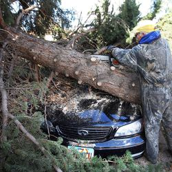 Bob Evans helps clear one of the fallen tree at his friend Shan Stott's home in Layton following a wind storm, Thursday, Dec. 1, 2011.