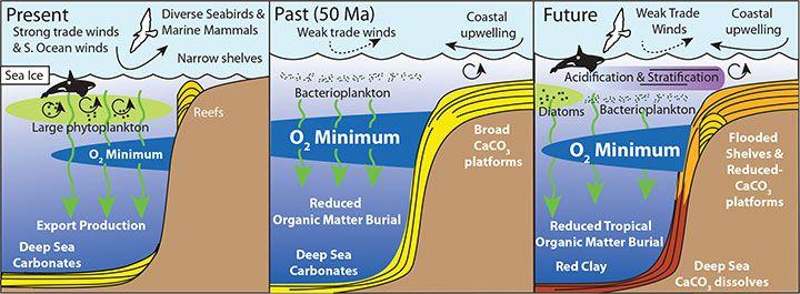 PETM acidification