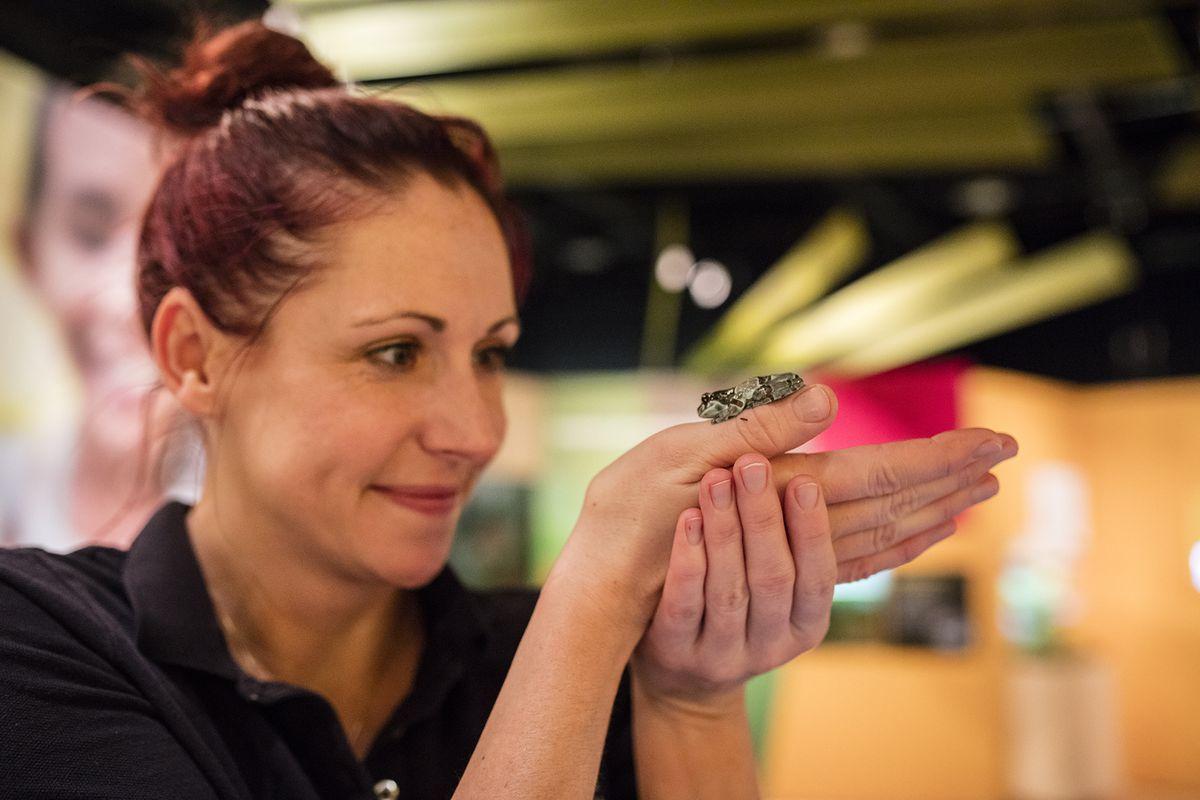 Trainer Zoe Hagberg and an Amazon milk frog.   ©Shedd Aquarium/Brenna Hernandez