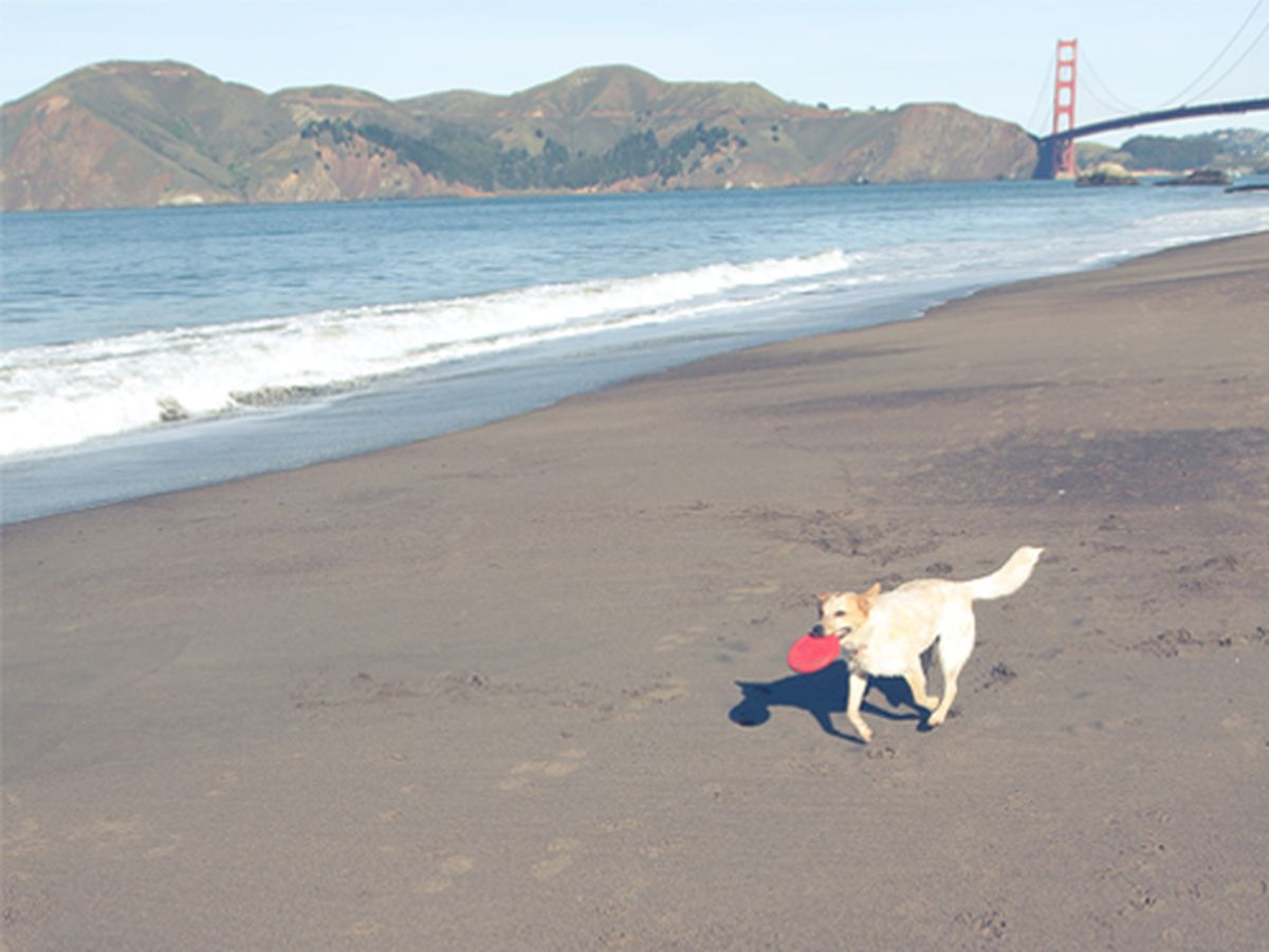 """Dog runs on Baker Beach come with an iconic SF view; photo by <a href=""""http://jamesngo.com/"""">James Ngo</a>"""