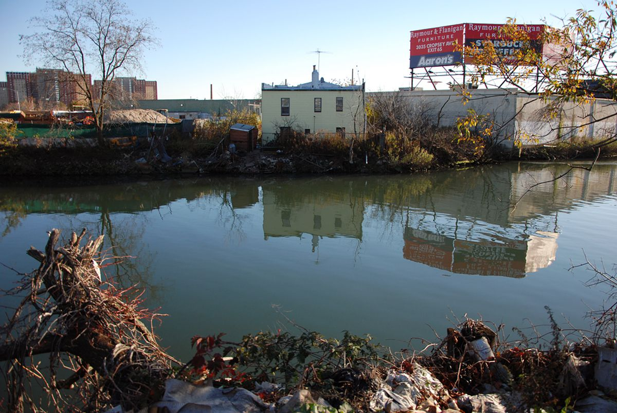 coney island s untamed creek caught between past future curbed ny