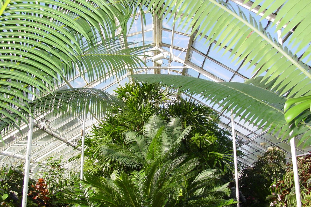 Inside a glass-panel greenhouse with a peaked roof, large palm leaves stretch upward and inward on either side. A tighter collection of palms is visible in the center.