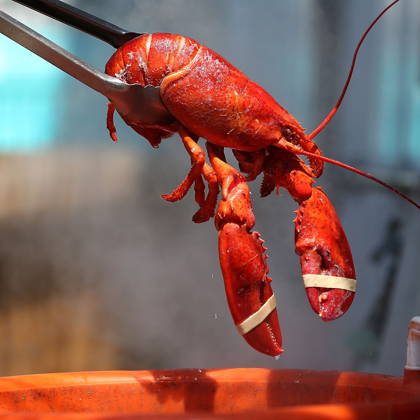 vox.com - Gaby Del Valle - A lobster pound in Maine is getting its lobsters high. Is this ethical?