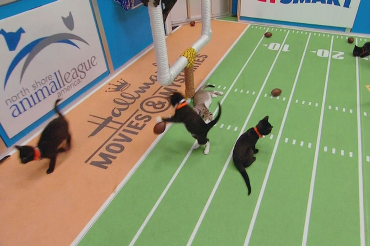 Kitten Bowl 2017 Final Score Noodles Wins Title For Home Family Felines Sbnation Com