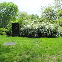 5/21/16: Ernie's shrub again in bloom -