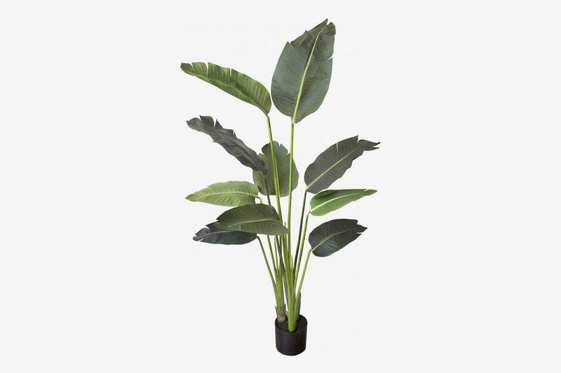 Black planter holds tall plant with large leaves.