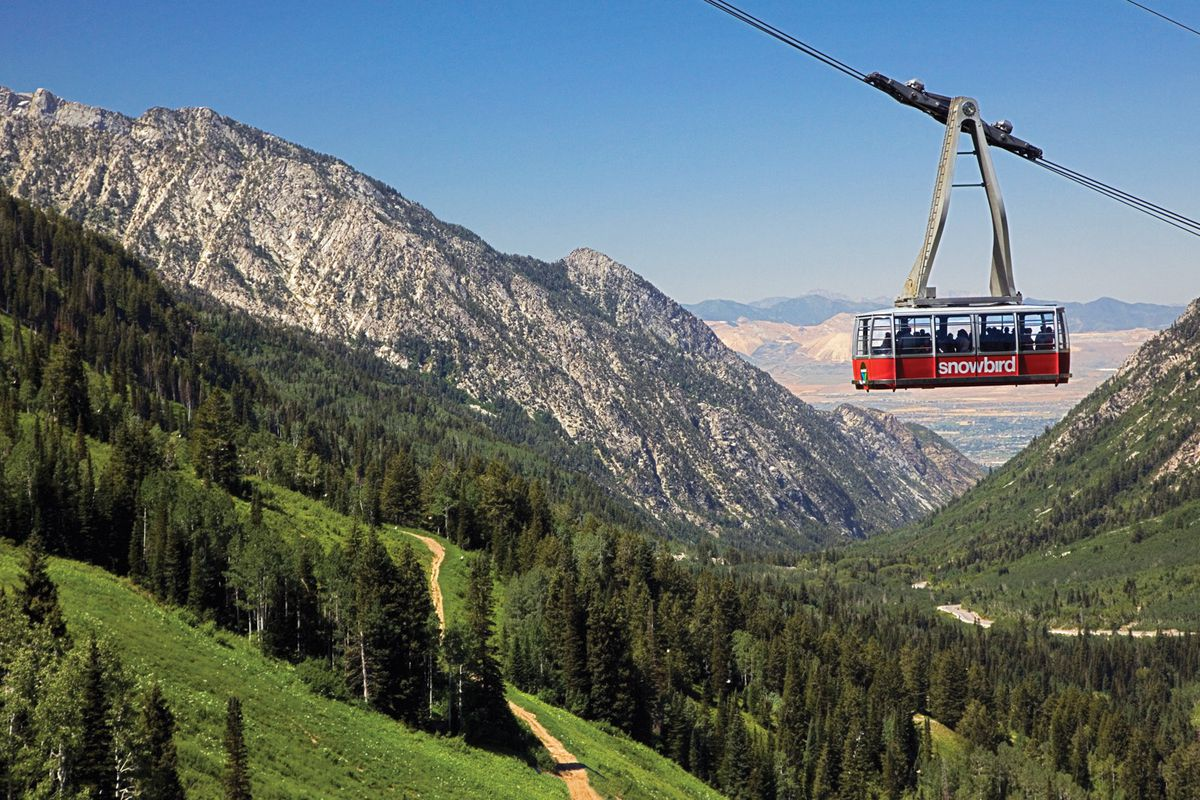 The snowbird tram traveling on cables above trees. There are mountains in the distance.