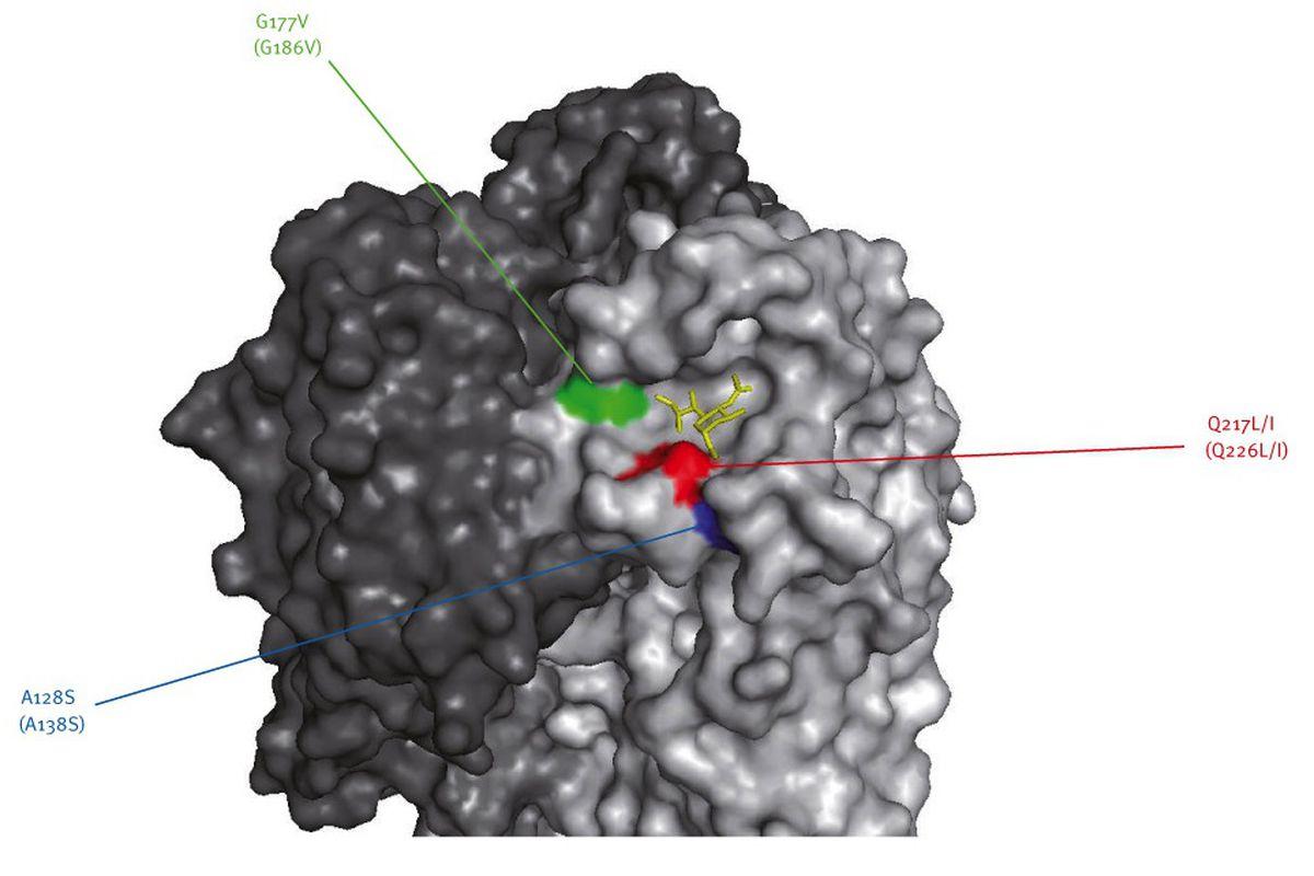 Avian flu H7N9 3D model from Eurosurveillance