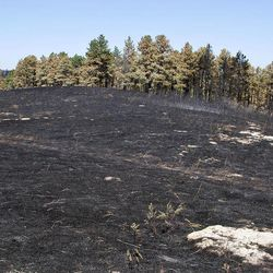 Black soot remains at the site of the West Ash fire at Chadron State Park near Chadron Neb., Sunday, Sept. 2, 2012. Nebraska Gov. Dave Heinaman toured the West Ash fire site and visited with local officials.