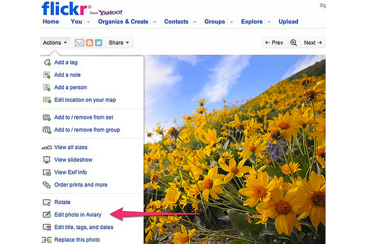 Flickr Aviary