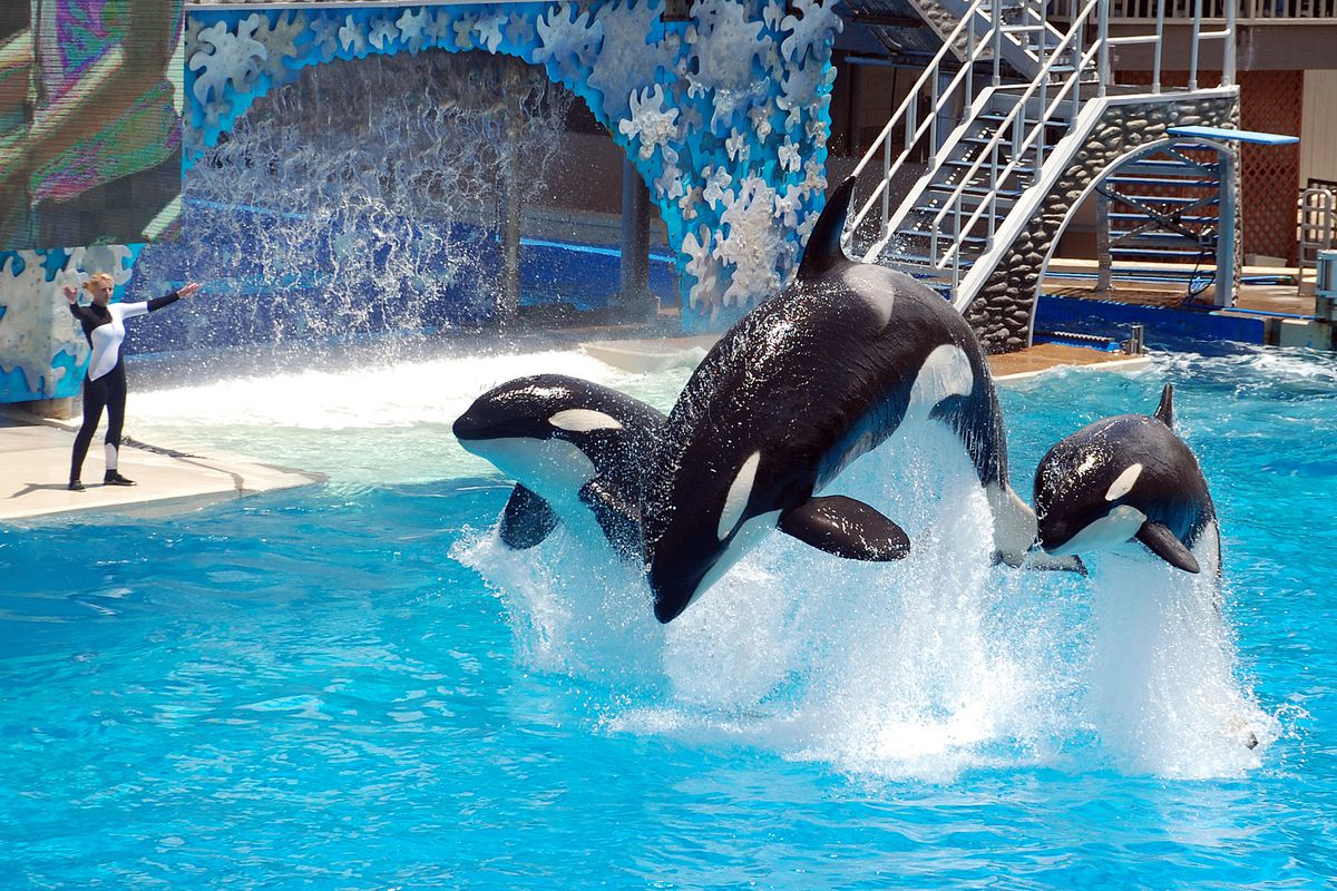 seaworld trainers will not be able to swim with killer whales again