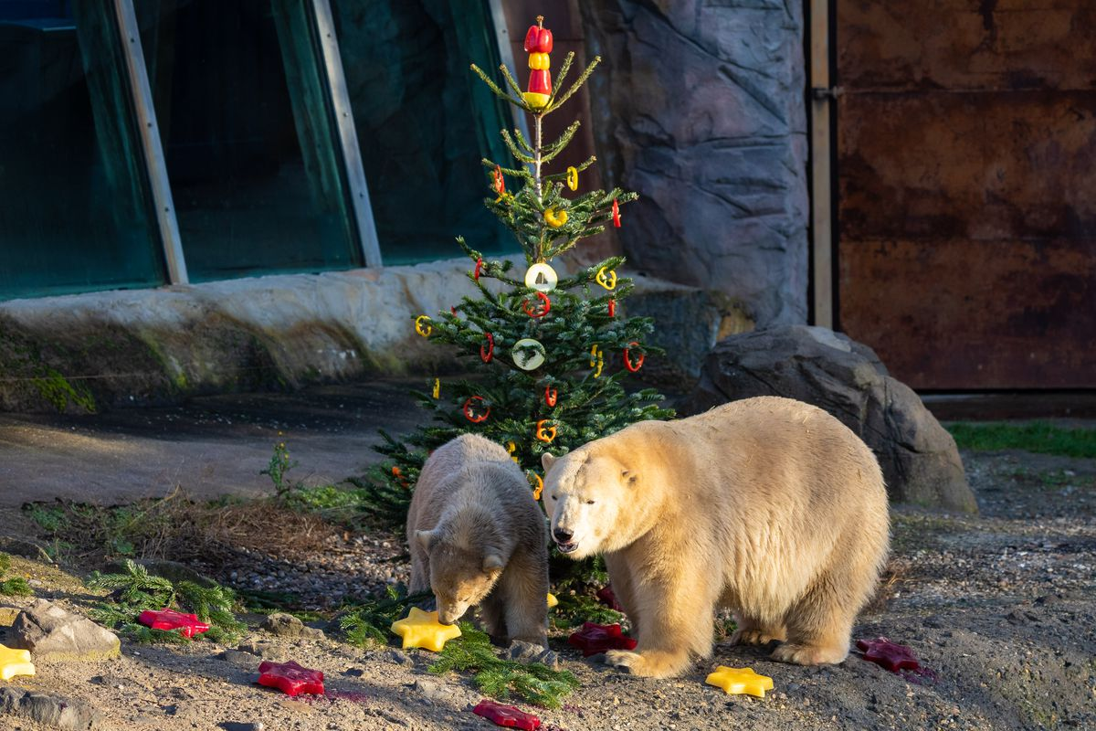 Animal presents at Hannover Adventure Zoo