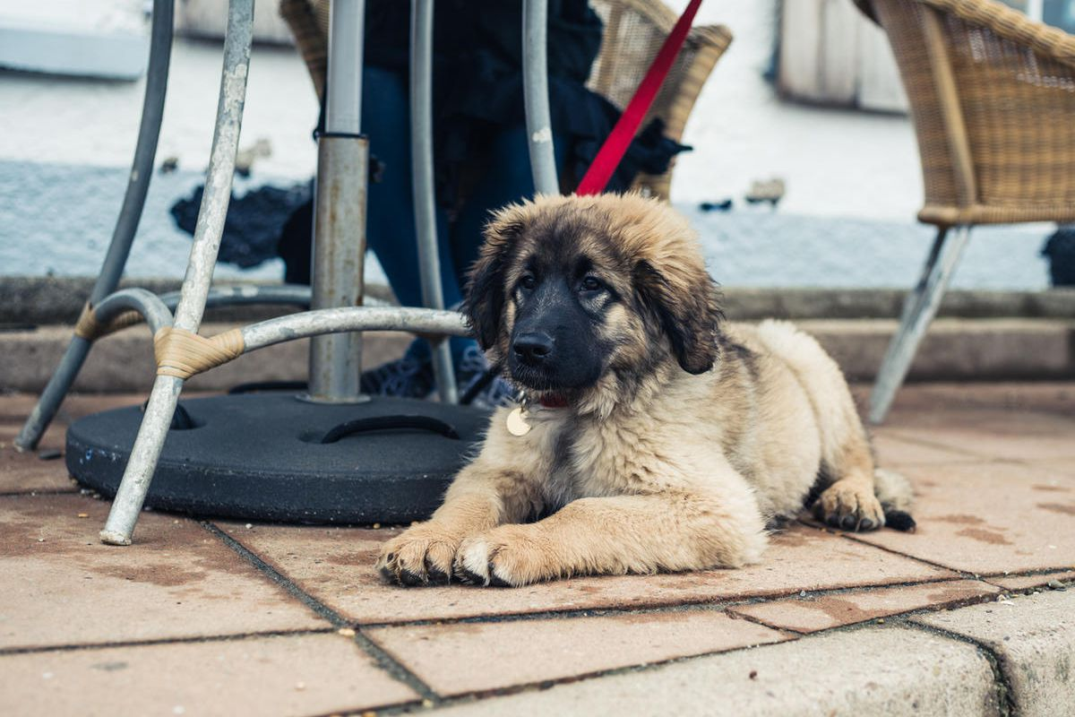 The Salt Lake County Health Department is reminding restaurants and cafÉs with outdoor eating areas that they need to apply for a regulation variance to allow dogs on their patios.